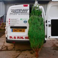 4 - 5 Foot UK Superb Nordman Fir non-drop Christmas Tree